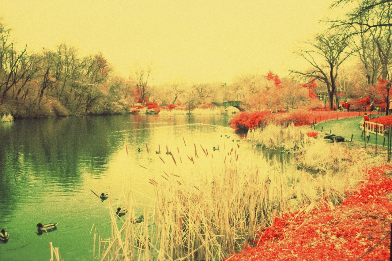 Central Park - Canon EF - Kodak Aerochrome IR - filtre rouge