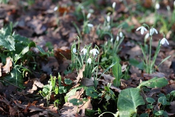 Petite fleur - Canon EOS 20D - Touraine