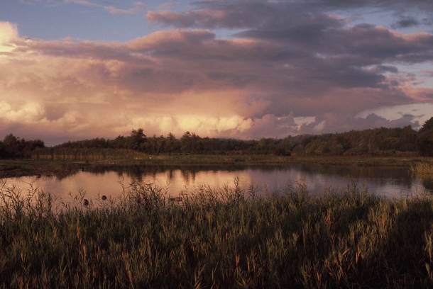 Lever du soleil sur le Parc - Canon EOS 100 - 50 mm f/1.4 - Fuji Sensia 200