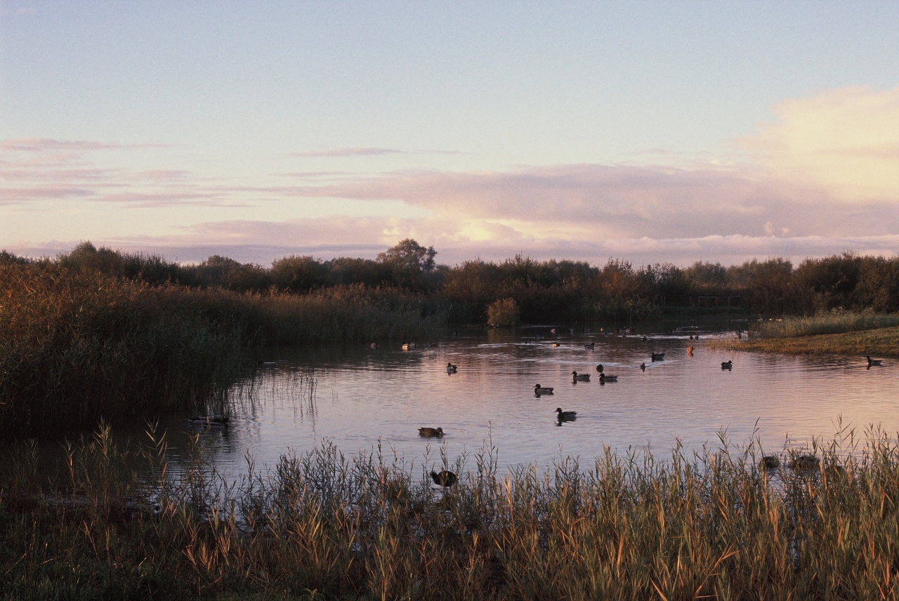 Le Parc du Marquenterre au lever du soleil - Canon EOS 100 - 50 mm f/1.4 - Fuji Sensia 200