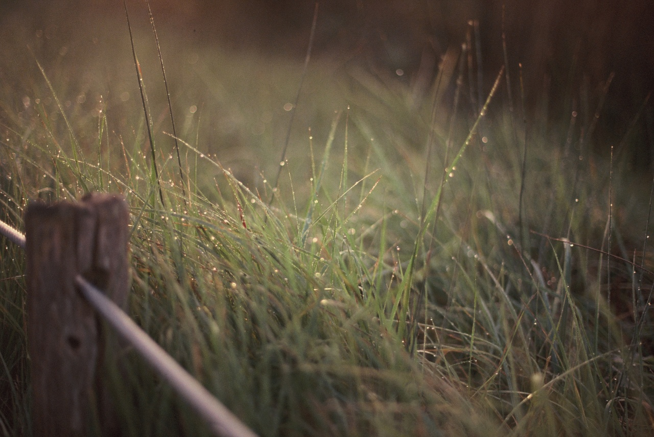 Couleurs d'automne - Canon EOS 100 - Fuji Sensia 200