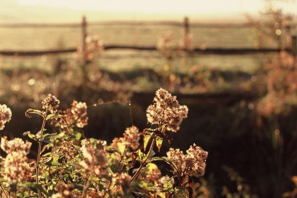 Jolie fleur d'automne - Canon EOS 100 - 50 mm f/1.4 - Fuji Sensia 200