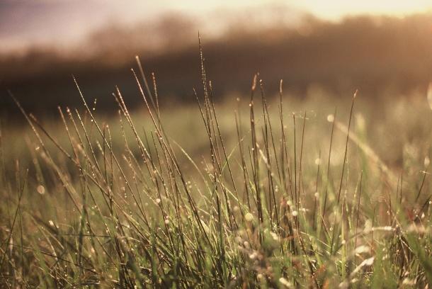 Dans la rosée du matin - Canon EOS 100 - 50 mm f/1.4 - Fuji Sensia 200